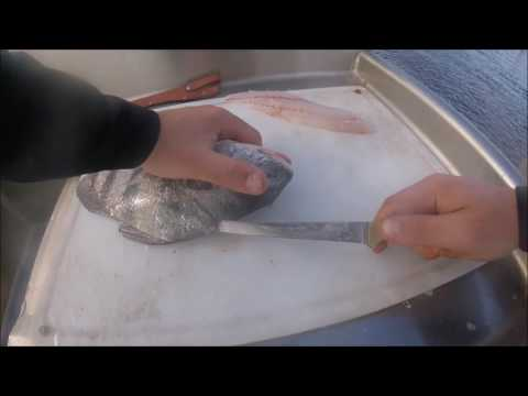 Black Drum Catch and Clean