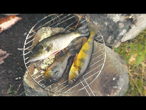 Surviving off Fish - Catching, Cleaning and Cooking!Huntinghot TV