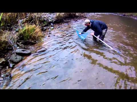 Fly Fishing Winter Steelhead - North Oregon Rivers