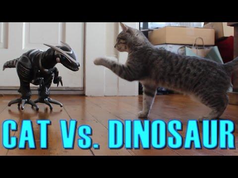 Cat Vs. Dinosaur - Cat Spooked, Then Befriends a Robot Dinosaur - Maya The Cat