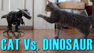 Cat Vs. Dinosaur - Cat Spooked, Then Befriends a Robot Dinosaur - Maya The Cat
