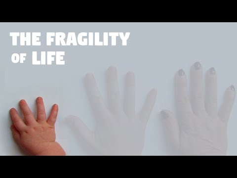The Fragility of Life - Nothing Lasts Forever