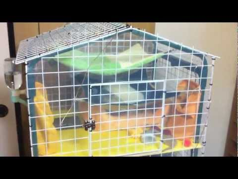 Home made Ferret Cage made from a Garden Shelf