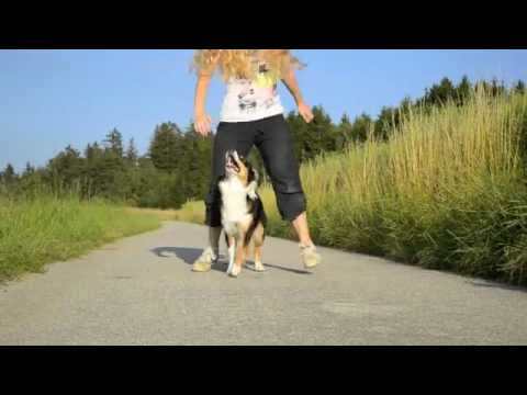 Amazing Dog Tricks - AMY (Australian Shepherd)