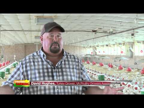 Poultry Production from Start to Finish