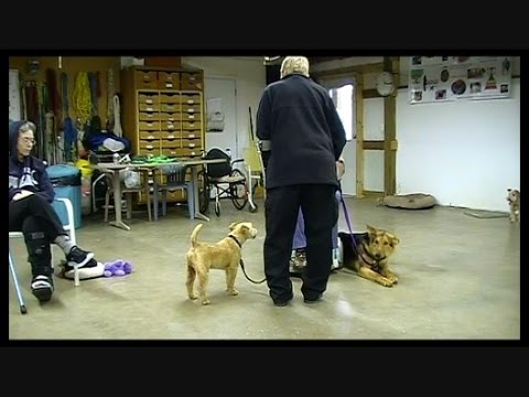 The difference between Service and Well Behaved Dogs