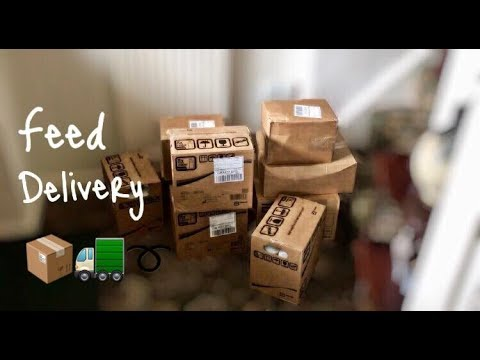♡ Feed Delivery + Temperatures🤒 (11.08.17) | Amy's Life ♡