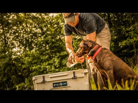 Blood Trailing Dogs For Recovering Deer - Silver Banded Retrievers