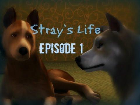 Stray's Life~Episode 1