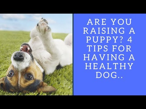 Are You Raising a Puppy? 4 Tips for Having a Healthy Dog