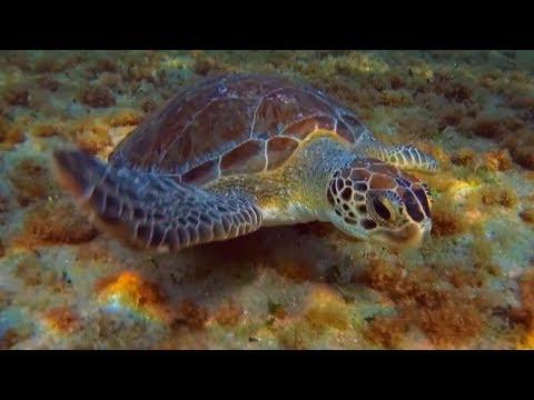 Snorkeling Turtle Reef in Boca Raton 2018