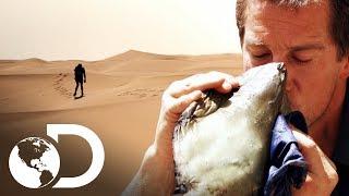 habilidades de supervivencia en el desierto Videos - 9tube tv