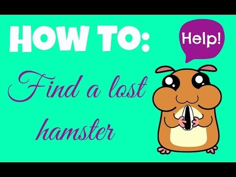 How To: Find A Lost Hamster