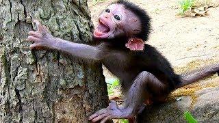 Baby monkey lost mom cries seizures