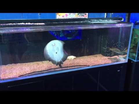 Measuring an aquarium