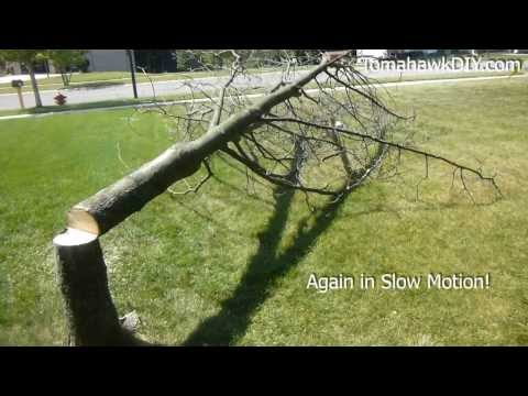 Cut Down a Tree with a Chainsaw