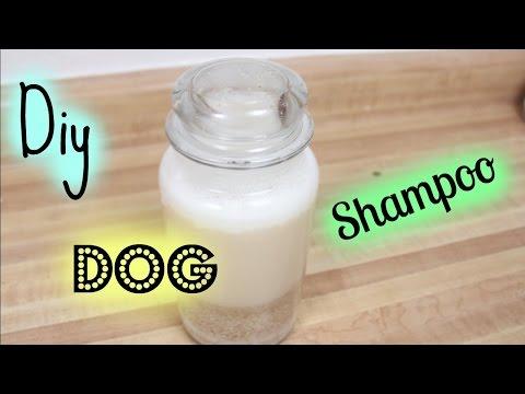 Diy Dog Shampoo|ChubbyPets