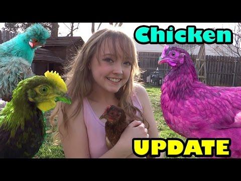 Chicken Update #2!