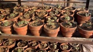 Strawberry Plant Information (Urdu/Hindi)