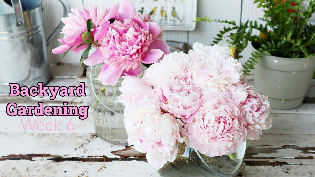 Backyard Gardening   Gardening 2021 Episode #6   Peonies in bloom