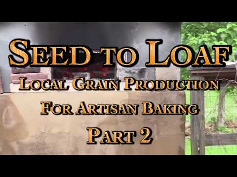 Seed to Loaf Local Grain Production for Artisan Baking Part 2