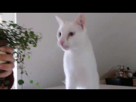 Culinary Cat - Tasting cat plants