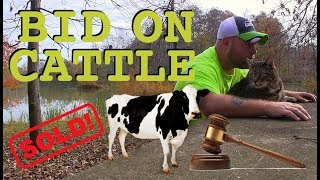 Alabama Cattle Auction, Hay Bale Art, & 5 Star Camping!