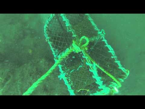 GOPRO Lobster pot