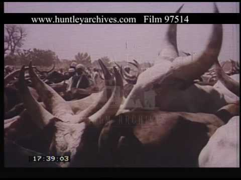 Agricultural Development In Nigeria, 1960s - Film 97514