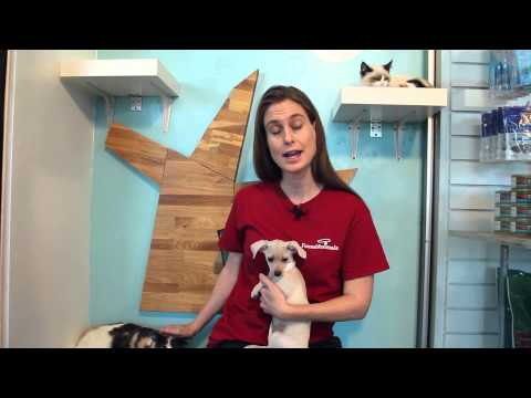 How Do Adult Cats Interact With Kittens or Puppies? : Pet Tips
