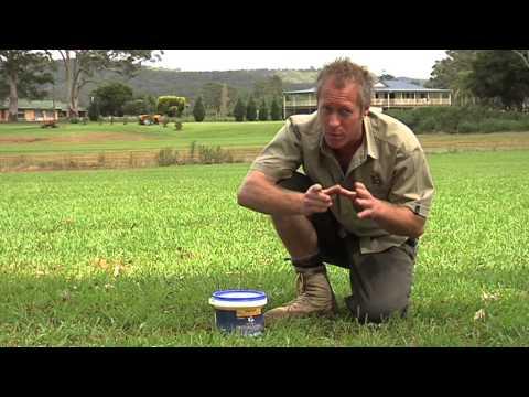 Worms in the Lawn - Jimboomba Turf