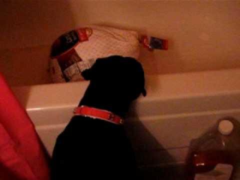 My dog vs frozen turkey