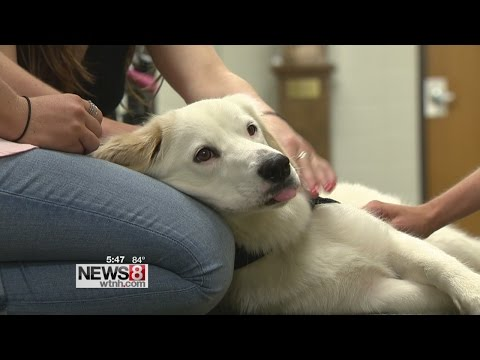Comfort dog helps reduce student stress