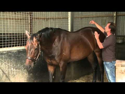 How to check your own horse's sore back with Christian Langeder.