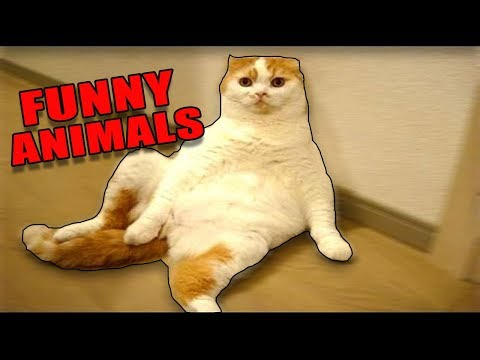 ANIMALS ON DRUGS! *Extremely Funny Animals* - (Funny Animals/Pets Compilation) 2017 NEW