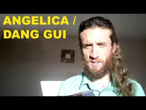 Angelica/Dang Gui - Top Women's Herb