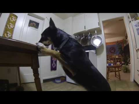 How to keep your dog off the table! Step by step....