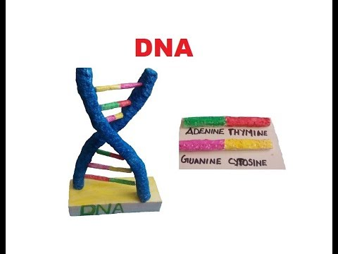 DNA Model by Using Thermocol | The4Pillars