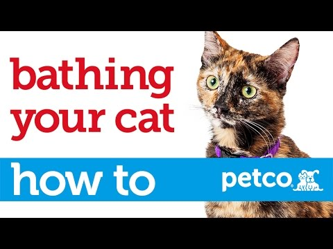 How to Give Your Cat a Bath (Petco)