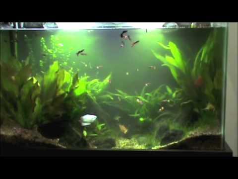 Algae in a planted tank #136