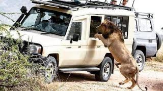 One Bullet One Lion Or Elephant Down | No Miss | Hunting Wild Animals