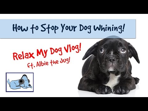 How to Stop Your Dog Whining and Crying! 🐶 #ANXVLOG04