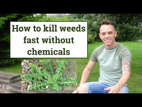 How to kill weeds easily with a weed burner without chemicals