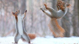 Top Funny Squirrel Videos Compilation - Cute Animals