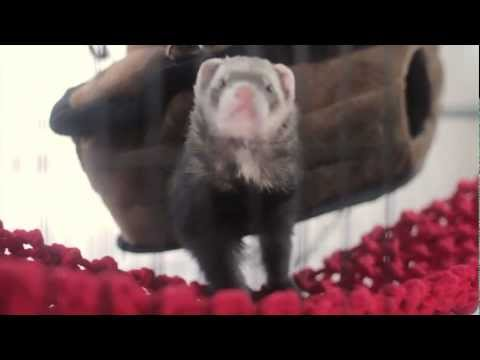 Pirate Ship & Pirate Net for Ferrets - Marshall Pet Products