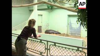 Pygmy hippo debuts at Paris Zoo