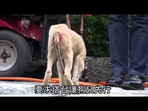 老蕭狗女兒 機師救的 紙片犬重生 贏6萬個讚--蘋果日報 20140305