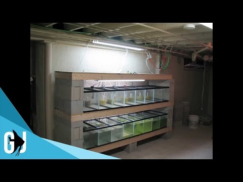 How To: Time Lapse Aquarium Tank Rack Construction