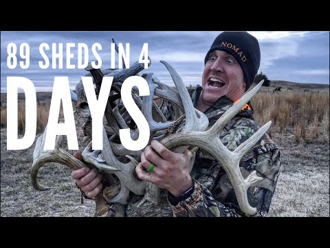 EPIC SHED HUNTING! 89 Sheds in 4 days! 2018   Bowmar Bowhunting  