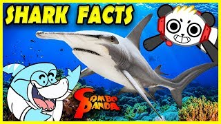 Combo Panda Learn about Sharks from Big Gil